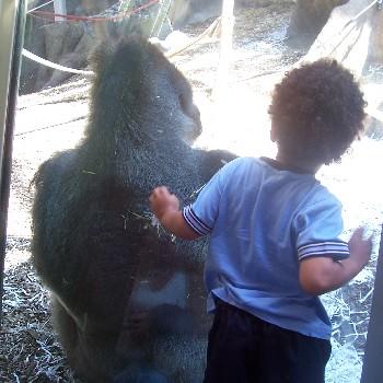 boy n gorilla