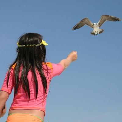 sea-gull-177364_640